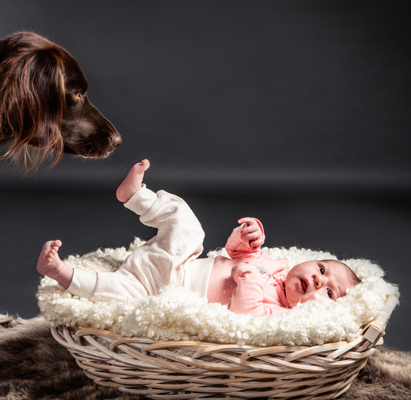 Baby Fotoshooting mit Hund - Sabrina's Fotostudio in Hamminkeln, zwischen Wesel und Bocholt am Niederrhein