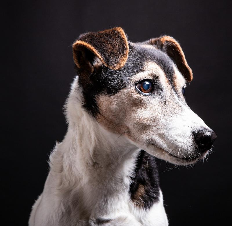 Hundeshooting Nahaufnahme - Sabrina's Fotostudio in Hamminkeln, zwischen Wesel und Bocholt am Niederrhein