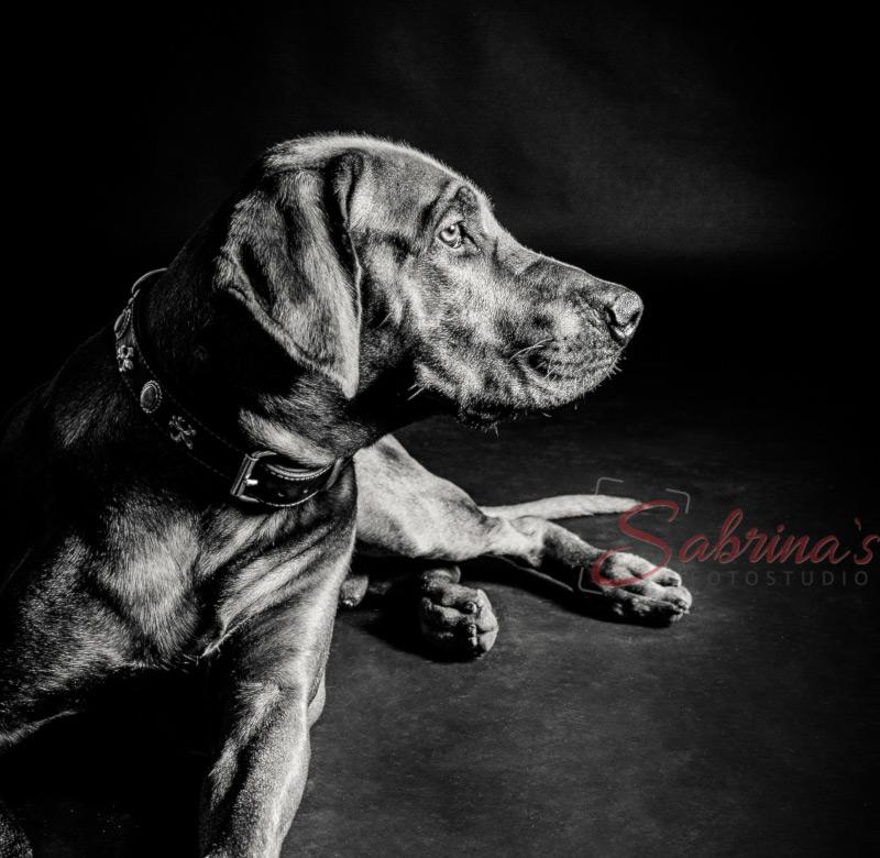 Hundeshooting vor schwarzer Wand - Sabrina's Fotostudio in Hamminkeln, zwischen Wesel und Bocholt am Niederrhein