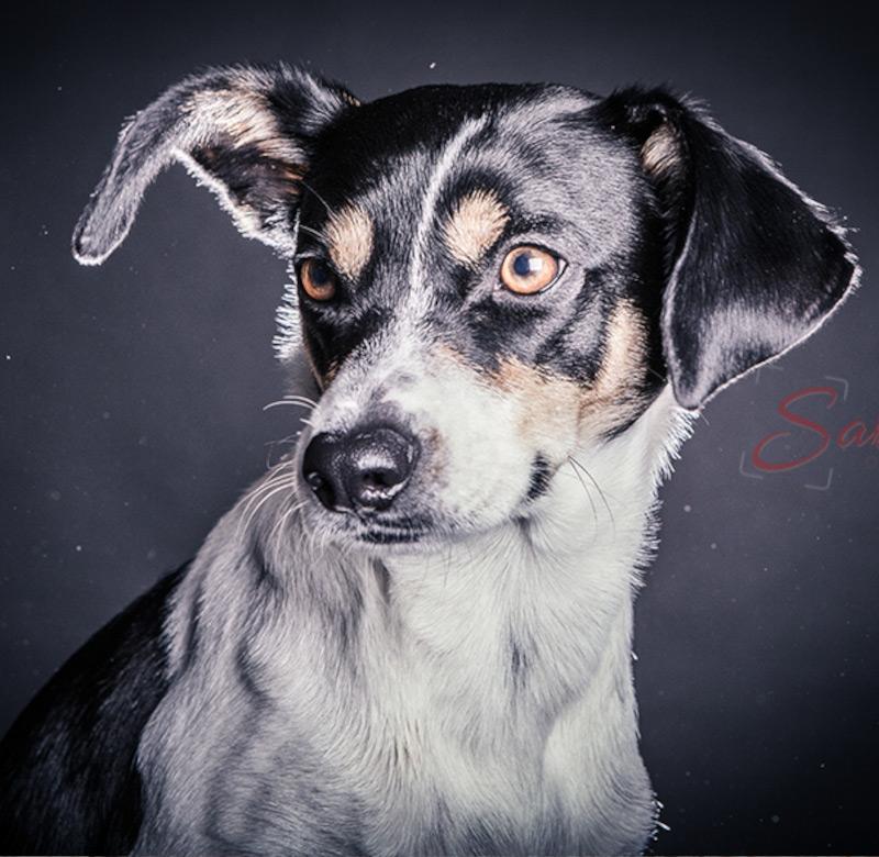 Hundeshooting - Sabrina's Fotostudio in Hamminkeln, zwischen Wesel und Bocholt am Niederrhein