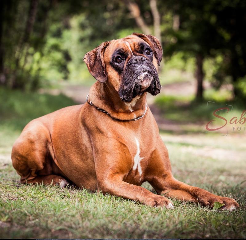 Hundeshooting auf Wiese - Sabrina's Fotostudio in Hamminkeln, zwischen Wesel und Bocholt am Niederrhein